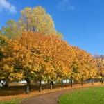 autumn-1300904_640